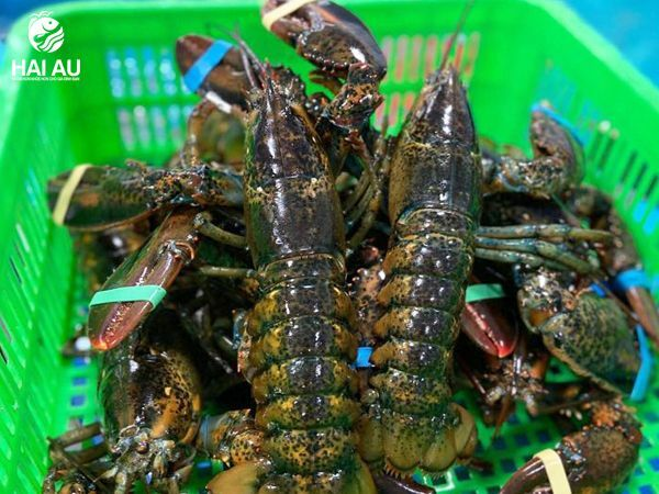 kinh nghiệm chọn hải sản sống tươi ngon